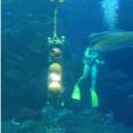 江戸っ子1号水槽実験
